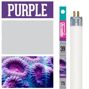 marine purple t5