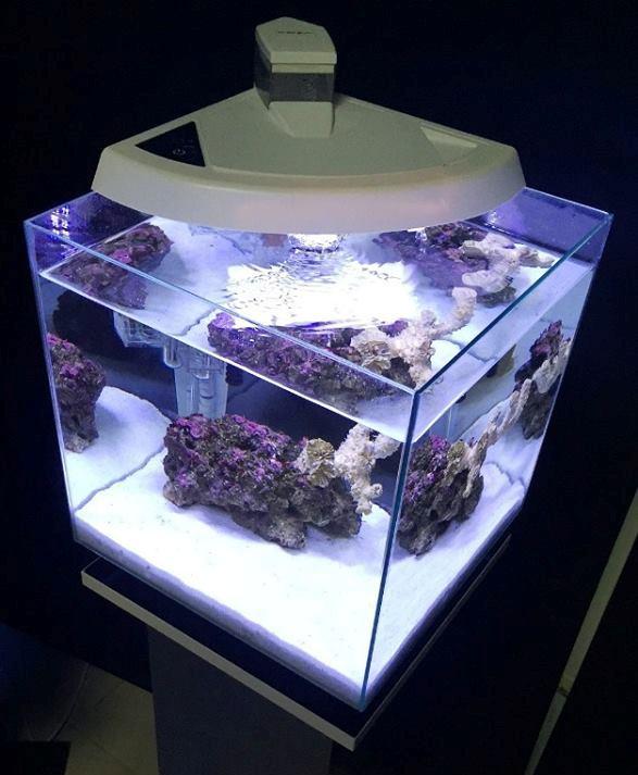 newa reef 50